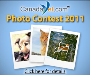 www.canadavet.com/photocontest
