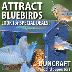 Attract More Bluebirds!
