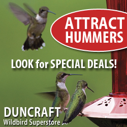 Select Hummer Feeders now on Sale!