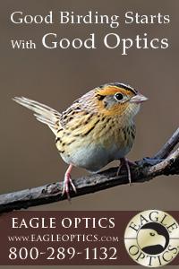 Good Birding Starts with Good Optics