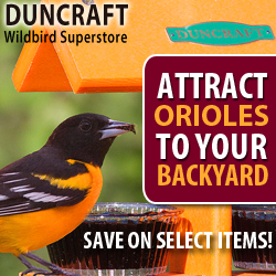 Select Oriole Feeders now on Sale!