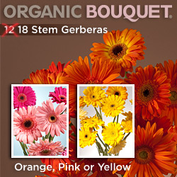 Gerberas (12) 18 Stems Plus Free Vase