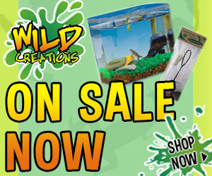 Wild Creation on Sale - Summer 2015