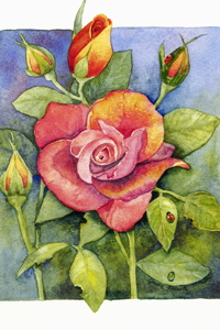 Grandmother's Rose by Jackie Friesth