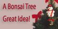 Bonsai Tree - Great Holiday Gift Idea