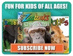 Fun For Kids of All Ages - Zoobooks