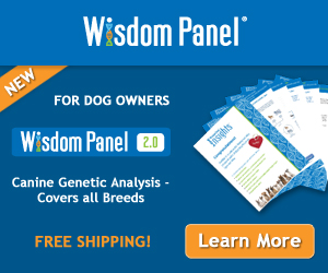 Wisdom Panel Mixed-Breed Easy-to-Use At Home Dog DNA Test. New and Improved Wisdom Panel 2.0 300x250
