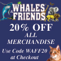 Bring out the animal in you at Whales & Friends