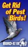 Get Rid of Best Birds with Bird-X