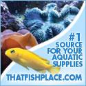 Discount Aquarium Supplies