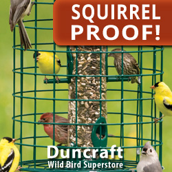 Shop over 80+ Styles of Squirrel Proof and Squirrel Resistant Feeders