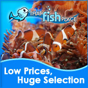 Discount Aquarium Supplies at ThatFishPlace.com