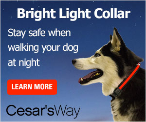 Solar-powered LED collar adds safety to walks at night with your dog