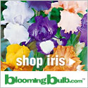 30% Off German Bearded Iris Mixes