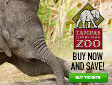 Tampa Lowry Park Zoo - Save On Tickets!