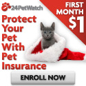 Affordable Pet Health Insurance For Cats And Dogs