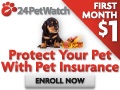 Pet Health Insurance in Ontario For Cats & Dogs
