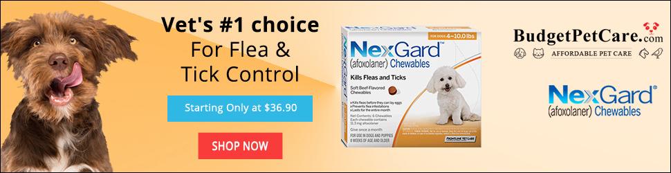 Nexgard Flea & Tick Control Treatment