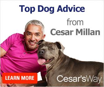 Get Top Dog Advice from Cesar Millan- Dog Whisperer