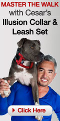 Cesar Milan: Illusion Dog Collar
