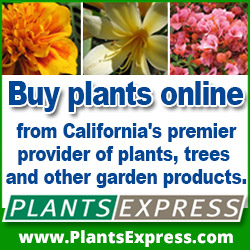Buy Plants Online from Calfornia's premier provider of plants, trees and other garden products.