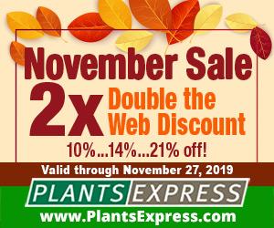 Image for November Sale 2X 2019