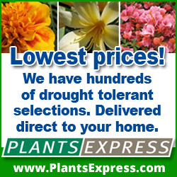 Click Here to shop the Lowest Prices on Hundreds of Drought Tolerant Plant Varieties Delivered Direct to Your Home from Plants Express and Support The Garden Oracle with Your Purchases!