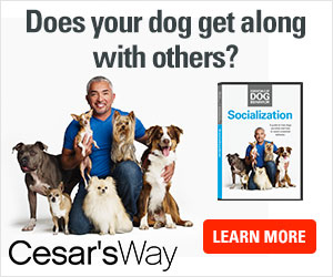 Cesar Millans shows you why it's important to socialize your dogs, and how you can do it.