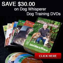 Save $40.00 on Dog Whisperer Training DVDs