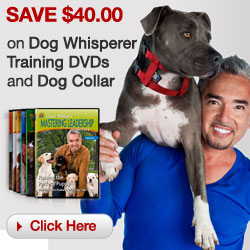 Save $40 on Dog Whisperer Training DVDs and Dog Co