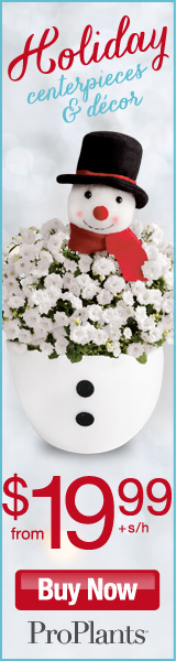 Holiday Decor from $19.99 at ProFlowers