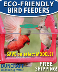 Save on our wide selection of Eco-Friendly Feeders!