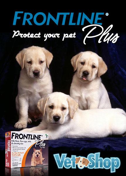 Frontline Plus - Pet Medication