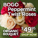 Buy One Dozen Get One Free Peppermint Twist Roses!