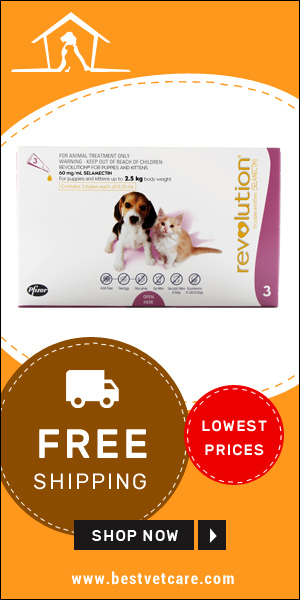 Free Shipping of Revolution for Dogs