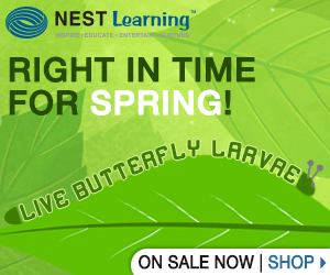 Butterfly Larvae at NestLearning.com