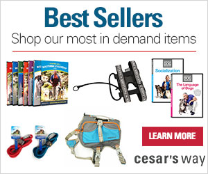 Shop the best selling Dog training items at Cesar's Way