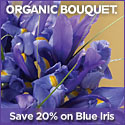 Beautiful Eco-Certified Spring Flowers, Wreaths &