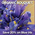 Beautiful Eco-Certified Spring Flowers, Wreaths &