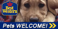 Best Western - Pets Welcome!
