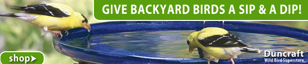 Shop Over 130 Bird Baths and Waterers!