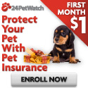 Pet Health Insurance For Cats <BR> & Dogs