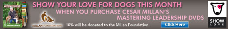 Purchase DVDs and help save homeless dogs
