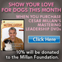 Purchase DVDs and help save shelter animals!