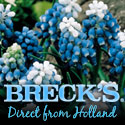 Brecks Bulbs Since 1818