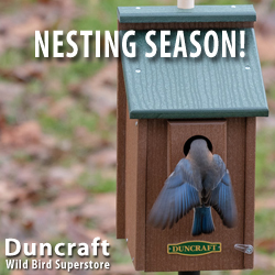 Shop Duncraft Wild Bird Superstore for All Your Bird Housing Needs!
