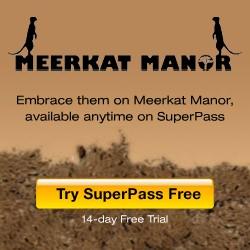 Meerkat Manor on Superpass!