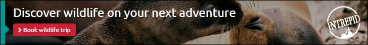 Discover Wildlife 728x90