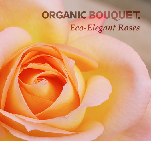 Send Eco-Elegant Flowers