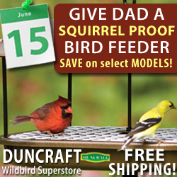 Squirrel Proof Bird Feeders are a Great Gift For Dad! Select Models on Sale!